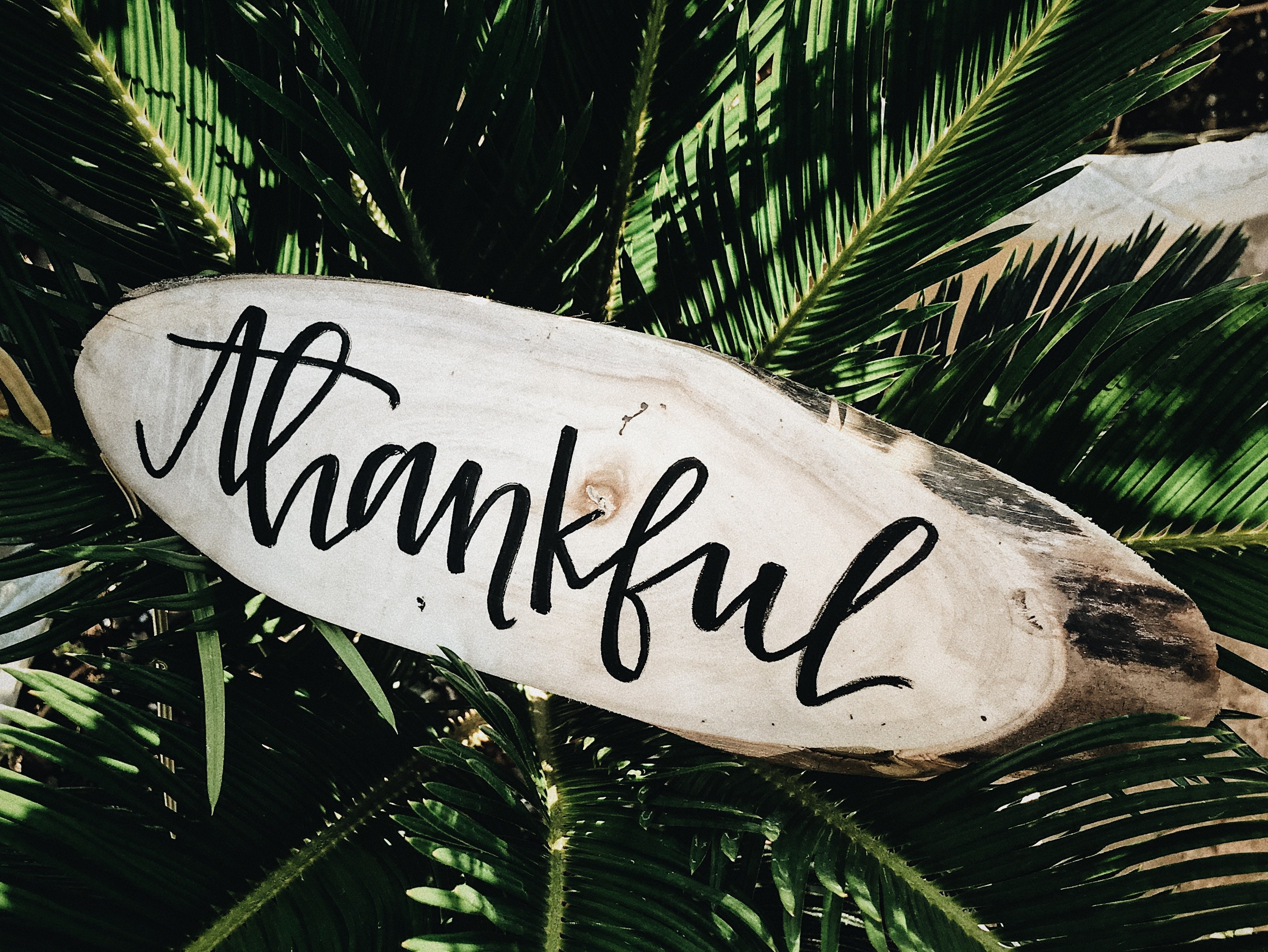 The Key to Thankfulness - Trust Blue Review